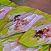 Selling Betel Nut For Chewing In Tachilek-burma Art Print