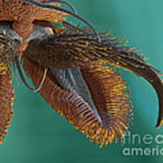 Sem Of Stable Fly Foot Art Print