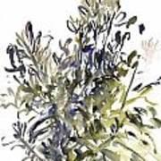 Senecio And Other Plants Art Print