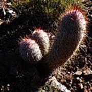 Senor Cacti Art Print