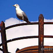 Sentinel Sea Gull Art Print