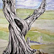 Sentinel Tree Art Print