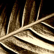 Sepia Leaf Art Print