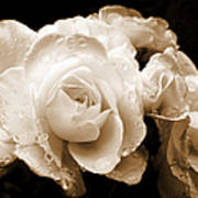 Sepia Roses With Rain Drops Print by Jennie Marie Schell