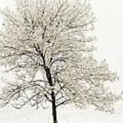 Sepia Square Tree Art Print