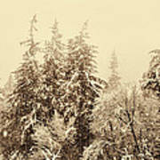 Sepia Winter Landscape Art Print