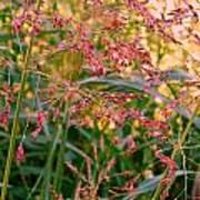 September Grasses Art Print
