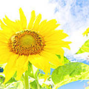 September Sun Art Print