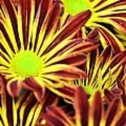 September's Radiance In A Flower Art Print