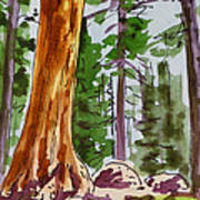 Sequoia Park - California Sketchbook Project  Art Print by Irina Sztukowski