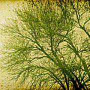 Serene Green 1 Print by Wendy J St Christopher