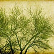 Serene Green 2 Art Print
