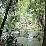 Serene Swamp Art Print by Silvie Kendall