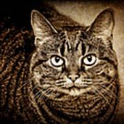 Serious Tabby Cat Art Print