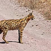 Serval Cat Art Print