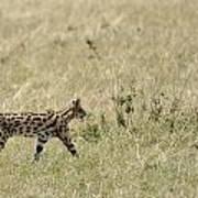 Serval Hunting Art Print