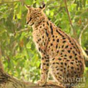 Serval Leptailurus Serval Art Print