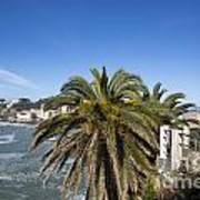Sestri Levante And Palm Tree Art Print