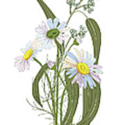 Set Of Chamomile Daisy Bouquets White Art Print