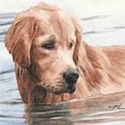 Setter Dog In Water Watercolor Portrait Art Print