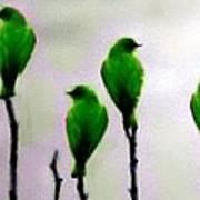 Seven Birds Of Green Art Print