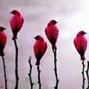 Seven Birds Of Red Art Print