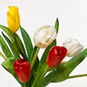 Seven Tulips - Four Colors Art Print