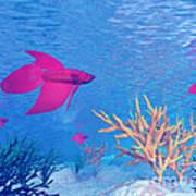 Several Red Betta Fish Swimming Art Print