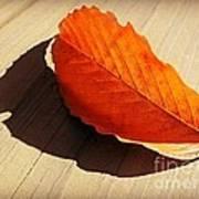 Shadow Cast By Leaf Art Print