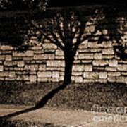 Shadow Tree Art Print