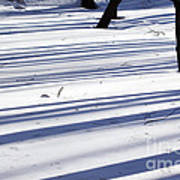 Shadows Lines On Snow In Park Art Print