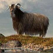 Shaggy Goat Art Print