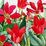Shakespeare Tulips Art Print