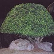 Shaped Tree Art Print