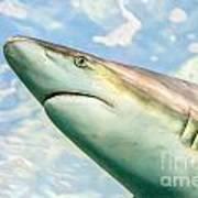 Shark Profile Art Print