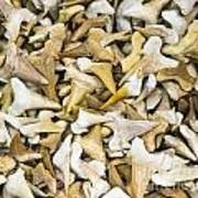 Sharks Teeth Art Print