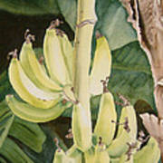 She Has Gone Bananas Art Print