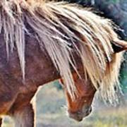 She Tossed Her Mane - Wild Pony Of Assateague Art Print