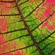 Shed Foliage Art Print