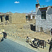 Sheep And Shepherd Along The Road To Shigatse-tibet Art Print
