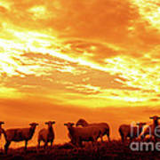 Sheep At Sunrise Art Print