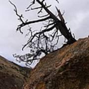 Sheep Creek Canyon Wyoming 10 Art Print