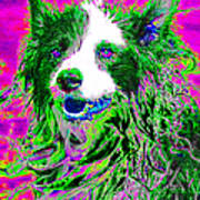 Sheep Dog 20130125v2 Print by Wingsdomain Art and Photography