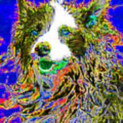 Sheep Dog 20130125v3 Print by Wingsdomain Art and Photography
