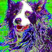 Sheep Dog 20130125v4 Print by Wingsdomain Art and Photography