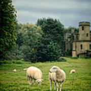 Sheep Grazing By Castle Art Print