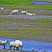 Sheep In Branch-nl Art Print