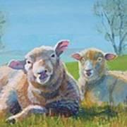 Sheep Lying Down Art Print