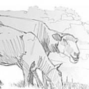 Sheep Pencil Drawing  Art Print