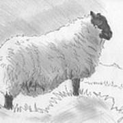 Sheep Sketch Art Print